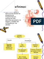 Sistema Digestivo, 8