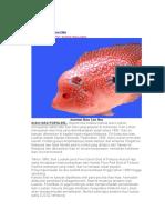Anatomi Ikan Lou Han