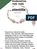Rod Potentilla