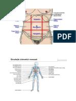 Cadrane abdomen + sistem venos