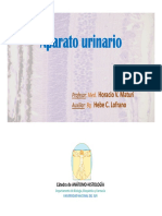 M3-2-Aparato Urinario (2)