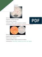 Prática de Parasitologia p2