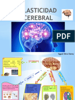 Organizador de Neurologia