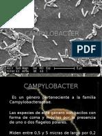 Campylobacter (Presentación)
