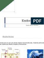 7 Endocitosis