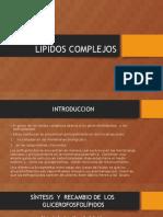 lipidos complejos