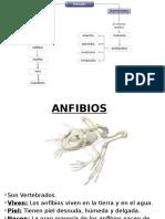 Anfibios, Reptiles y Aves