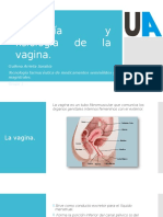 Anatomía y Fisiología Vagina