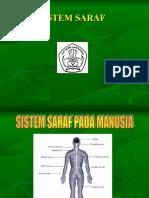 13 Sistem Saraf Indera Ok