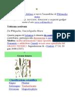 TRITICUM AESTIVUM.doc