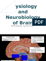 Physiology of Brain