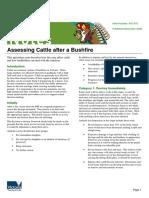 Assessing Cattle After a Bushfire