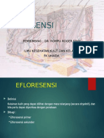 PPT-EFLORESENSI
