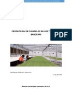 Proyecto de Producción de Plántulas de Hortalizas en Bandejas