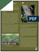 Mangleblanco02jul09.pdf