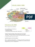 Biologia - Celulas,Dna,Rna 22