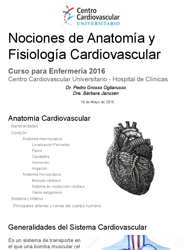 Anatomía y Fisiología Cardiovascular 2016