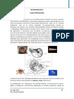 Clase Cephalopoda