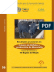 Bufalo.pdf