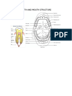 teeth and mouth structure