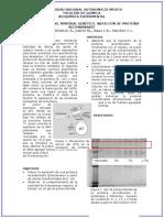 Proteina_recombinante.docx