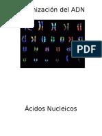 División Celular (Genética)