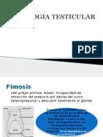 Patologia Testicular - JLMM