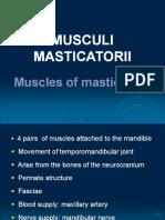 Muscles.pdf