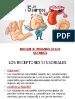 Organos de Los Sentidos.blog