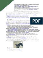 199245515-Fotografierea-subacvatică.doc