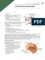 Ventrculos Laterales e Hipocampo