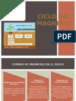Ciclo Del Magnesio