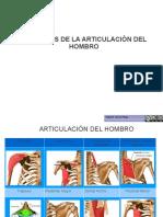 Musculos y ariculaciones Del Hombro