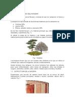 Trabajo de Fundamentos y Clasificacion de La Madera