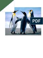 bcttest-document.pdf