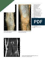 Anatomy Urg