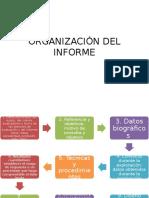 Organización Del Informe