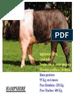razas.pdf