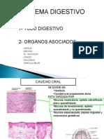 Cortes histológicos del tracto digestivo con su respectivo nombre