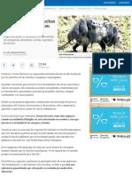 Defensores piden protección para las chuchas - Medellín - ELTIEMPO.COM