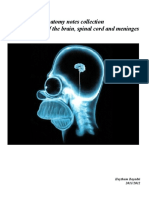 Neuroanatomy notes.pdf