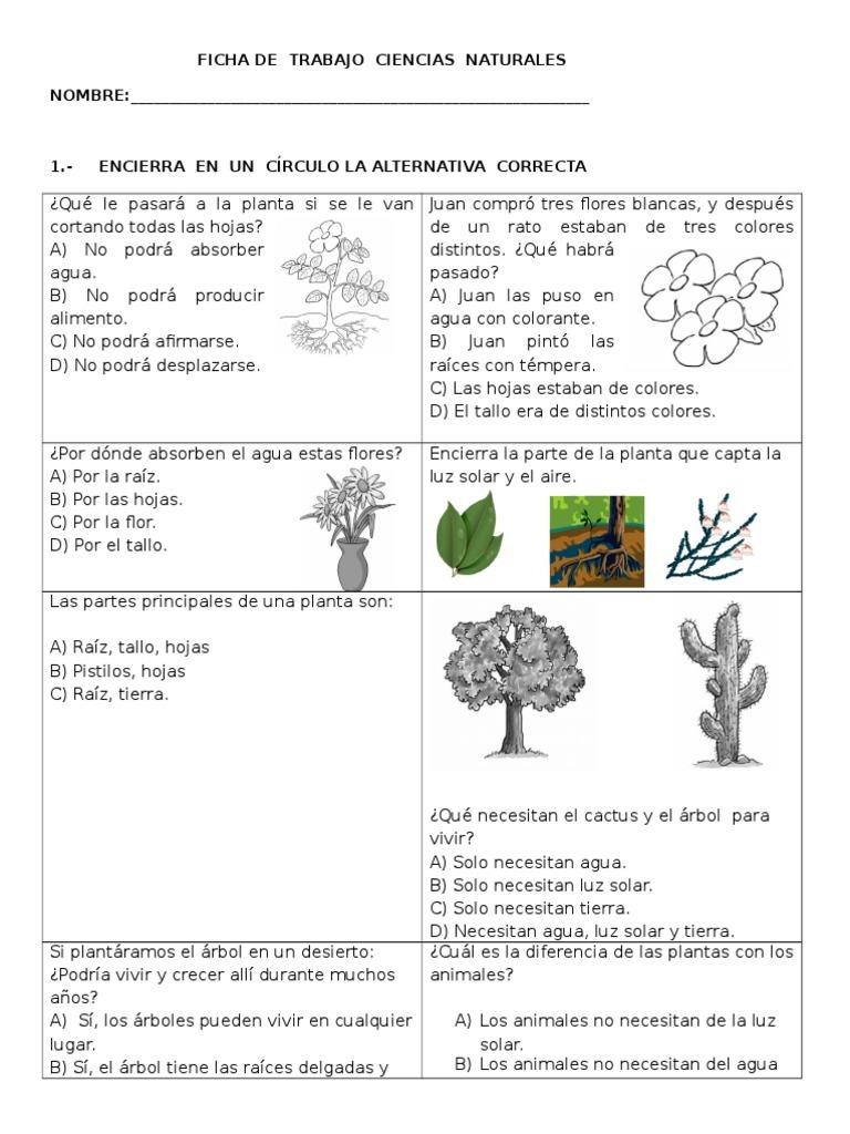 Hermosa Anatomía Tallo De La Planta Galería - Anatomía de Las ...