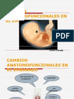 Cambios Anatomofuncionalesv[1].Ppt