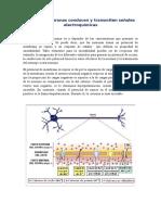 Conducción Neural y Transmiisión Psináptca