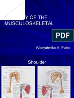 Anatomy of the Musculoskeletal