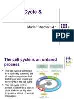 The Cell Cycle & Cancer (2)