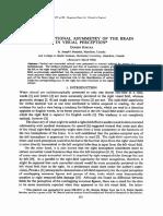 Dual Func Asymetry Brain Vis Per