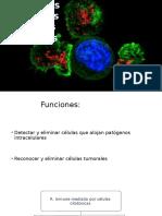 Reacciones Citotóxicas Mediadas Por Células
