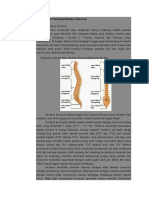 Anatomi Dan Fisiologi Vertebra Thoracal