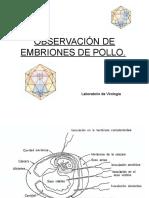 "g)Observaciã""n de Embriones de Pollo"